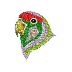 Parrot head -