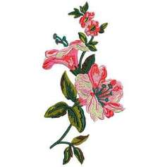 Orchids - Picaje